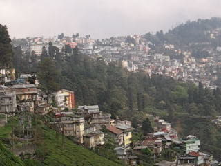 Darjeeling, Inde : 2. India Tea Plantations