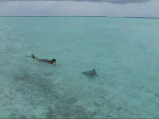 Stingray in shallow waters near resort bar
