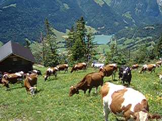 Genève, Zwitserland: 02. Organic Music from the Cow Bells