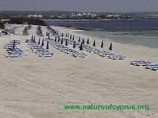 Ayia Napa beaches - top class!