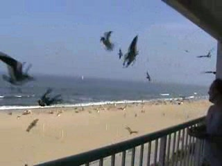 Feeding the birds at Virginia Beach