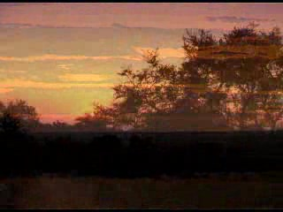 Kruger National Park, Sydafrika: Umlani Video