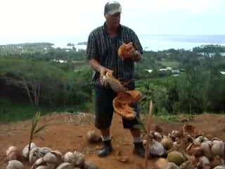 Rarotonga, les Cook : How to open a coconut husk 
