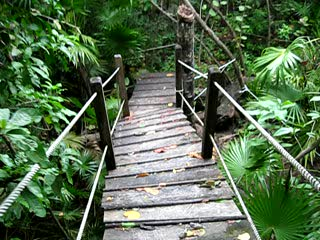 Xanadu Island Resort Belize: Nature Walk at Xanadu