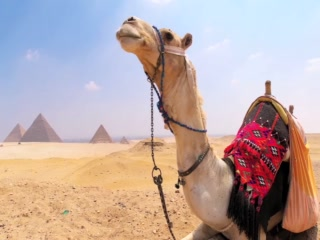 , : Cairo - Top 5 Travel Attractions