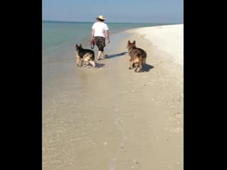Port Saint Joe, FL: My babies on CBS. Had the beach to ourselves.