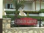 Lemon Grove B4