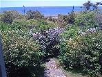 1331 - CHAPPY COTTAGE WITH SPECTACULAR VIEWS OF EDGARTOWN HARBOR & LIGHTHOUSE