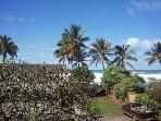 Papaya, plumeria & ocean views: North Shore O'ahu