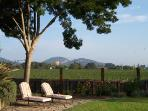 NAPA VALLEY 4 BED 3 BATH VINEYARD VIEW