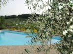 chianti 20 mn to florence wifi free nice apartment