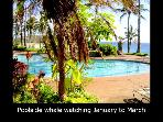 Beautiful Molokai Condos at Kepuhi Beach Resort