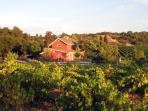 Healdsburg Farmhouse, Home & Cottage ~near  Plaza