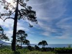 """Heavenly Vista"" Views of Ocean & Point Lobos!"