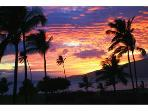 Beautiful Ocean Front 1 Br Condo in Kihei