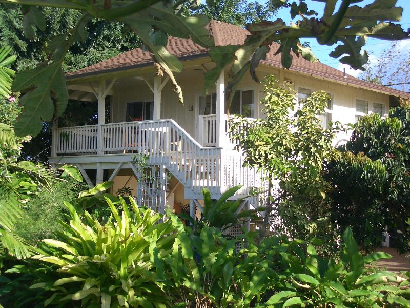 Cottage nested in the tropical trees