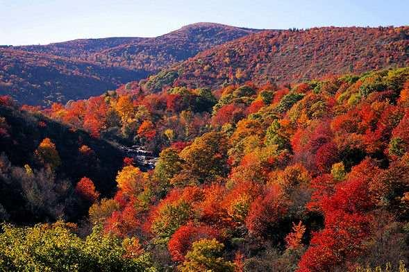 Fall's leaf changing season - the best in the nation!