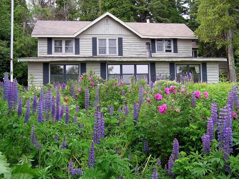Lupine Lodge on Lake Superior in June