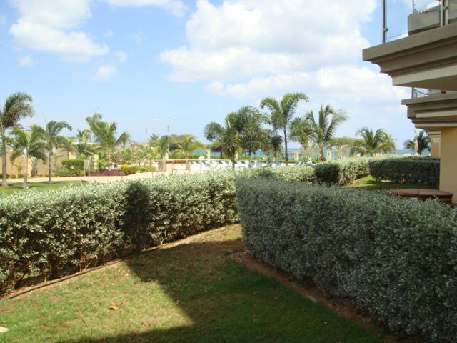 Private garden space enclosed by green hedges...