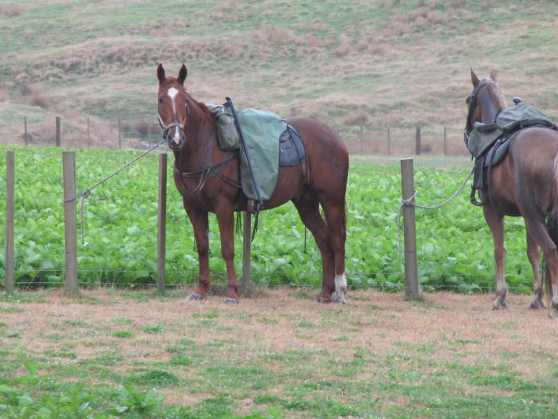 Horsing Around at Mokai - High Country Sheep Station Rural Accommodation - Taihape - rentals