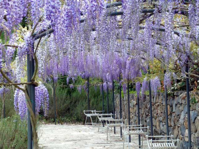An arcade of wisteria marks the perimeter of the wonderfully restored garden.