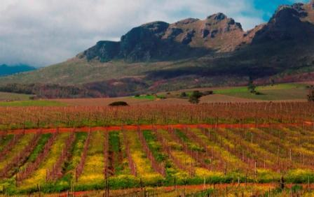 Vineyard and Mountain Views
