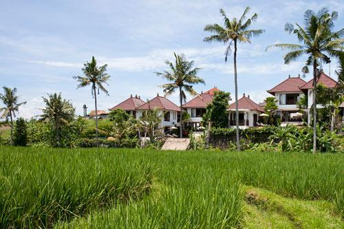 Surrounded by stunning rice fields - 3 bedroom villa in Canggu Terrace - Canggu - rentals