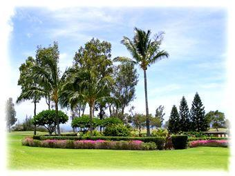 Your Daily View from our lanai