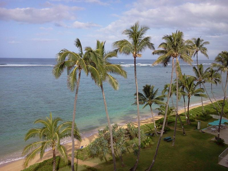 Beach and Palms - View from Living Area