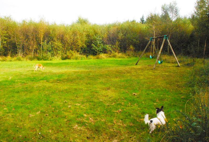 Dugs in play area