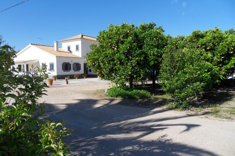 view of the front of the house with orange orchard