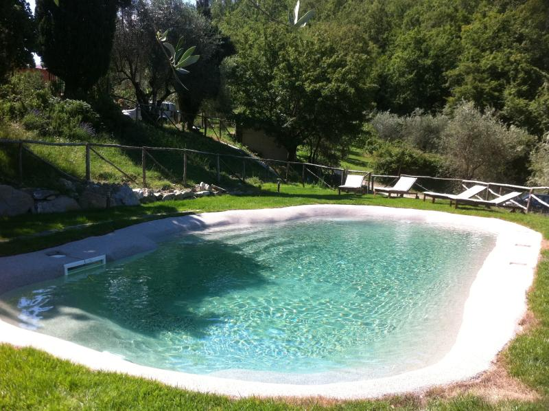Our beautiful swimming pond with salty water