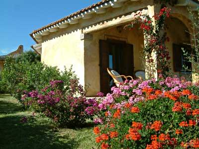 Garden with olive and fruit trees and colourful flowers
