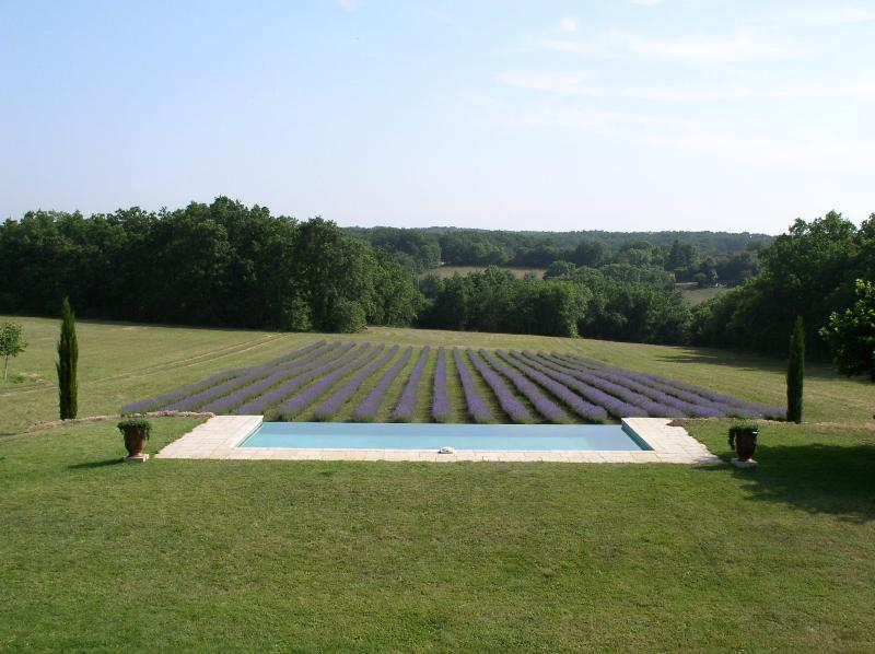Stunning horizonless pool with our lavender field beyond