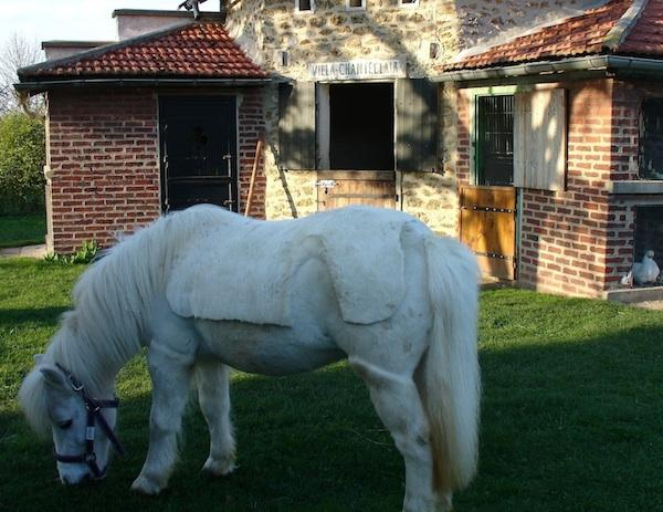 Our shetland pony waiting for your children