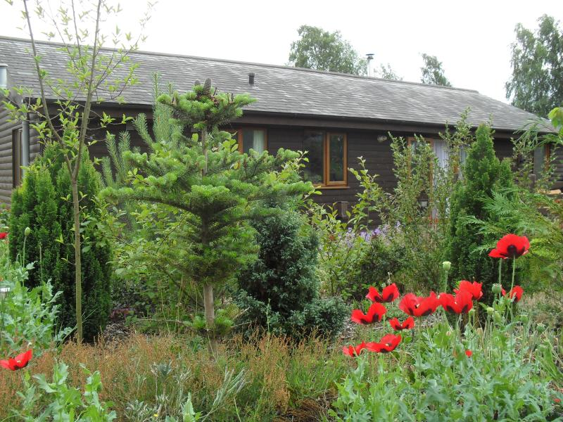 Front door and patio side of the Cabin - with Norfolk poppies