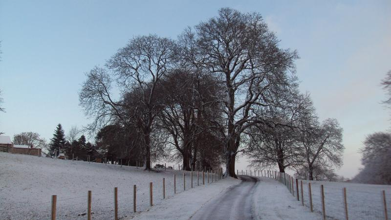 driveway to house during winter