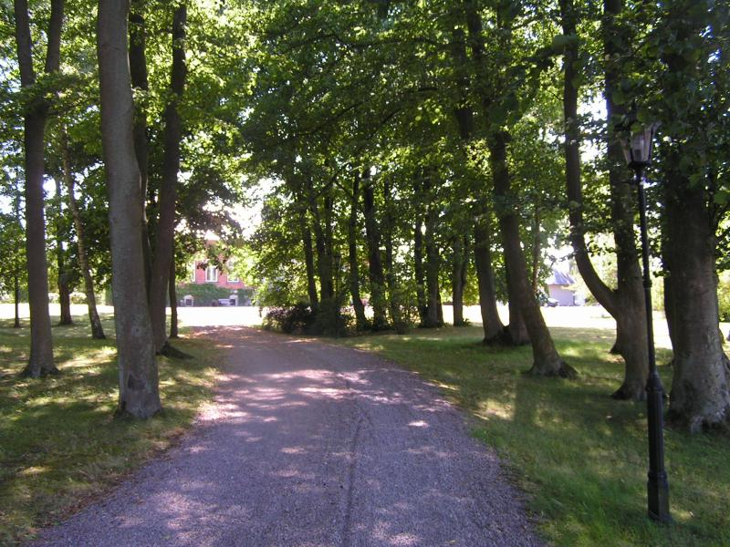 Entrance road thru the park like garden