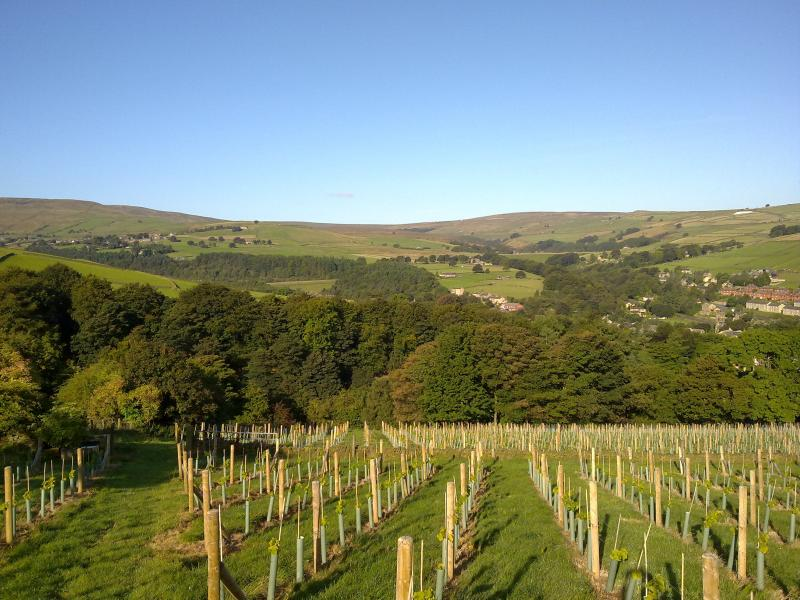Views Over the Peak District National Park from the vineyard