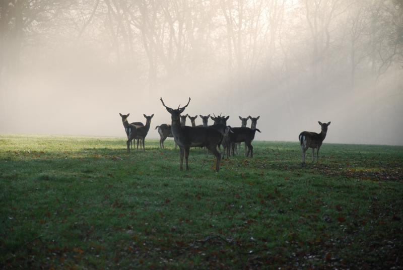 Early morning visitors at the end of the garden....