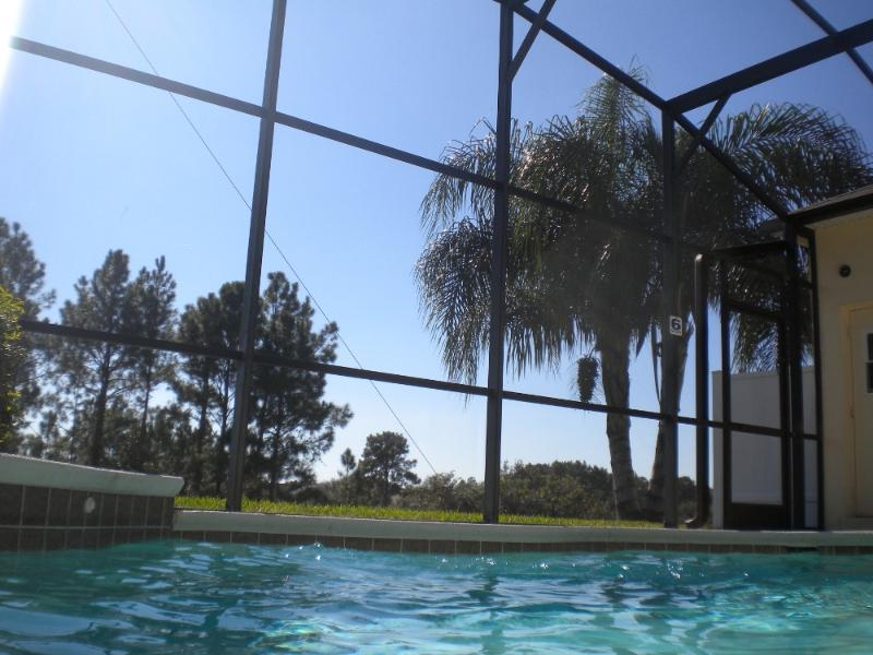 View of the queen palm from the pool
