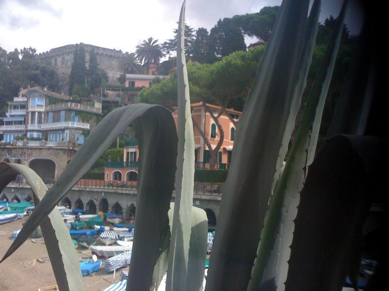 Beach of Levanto with traditional Agave