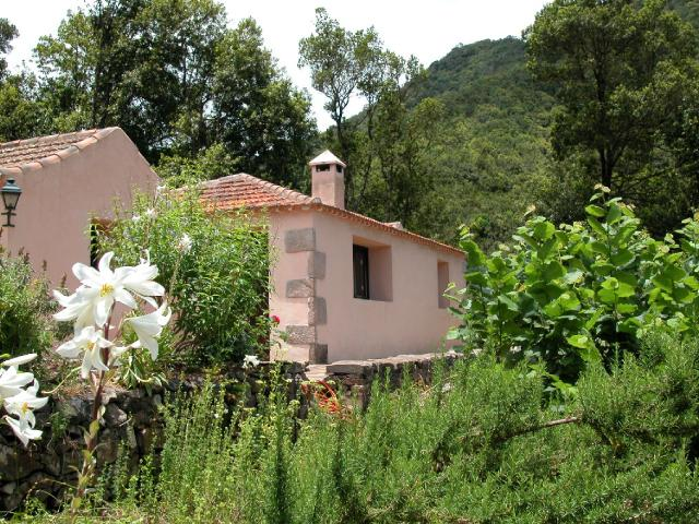 Enjoy our house and the incredible nature of Garajonay National Park