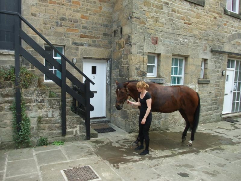 Riding Cottage - the horse was passing by and is not a resident!