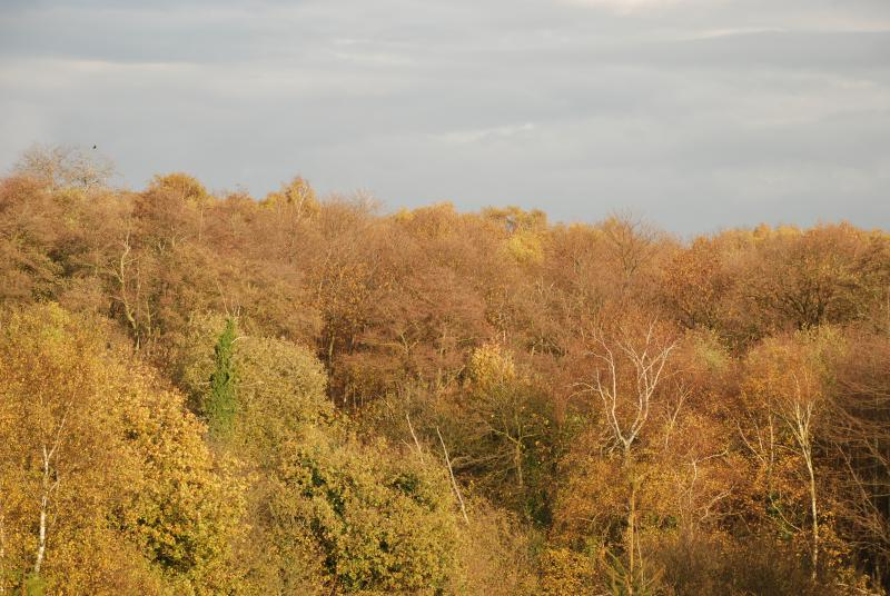 An Autumn View from Woodlands