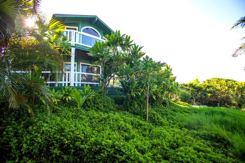 Late afternoon sun brings out our luscious greens