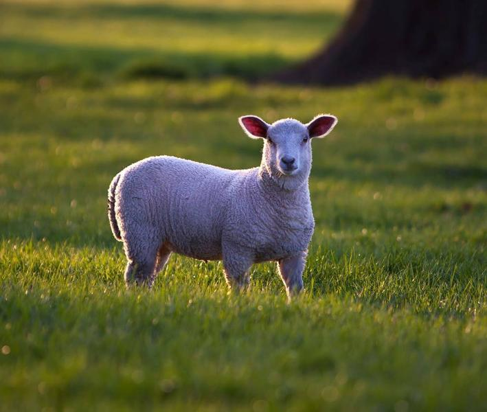 Spring will soon be in the air at Wharton Lodge with Lambs in the park. Short breaks available