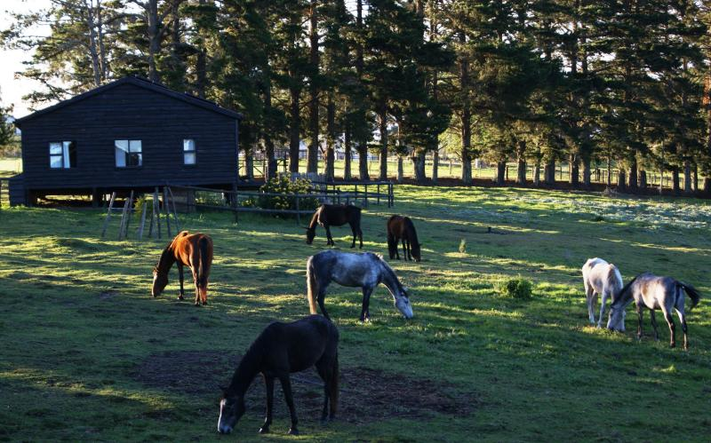 Free-roaming horses in front of Merlin's Cottage