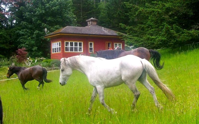 Mustangs in the meadow outside your door!