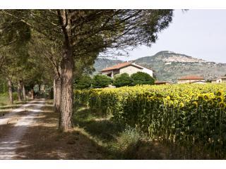 Driveway to Casa bel Posto with Cortona up on the hill in the background